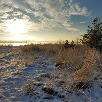Около зимы :: sergej-smv