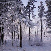 Замёрзший лес :: Наталия Григорьева
