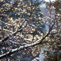 ледяные бусы декабря :: Евгений Фролов