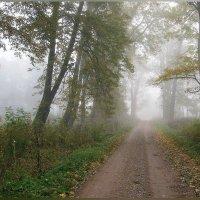 Утренняя дорога в лесу... :: Nikolay Shumilov