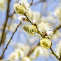 Для тех кто ждёт весны :: Денис Samuila