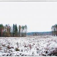 Зимняя вырубка...2 :: марк