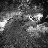 Орел :: Анна Кокарева