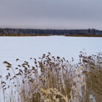 На озере :: Алексей Масалов