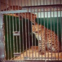 зоопарк :: Наташа Муртазаева