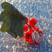 Этюд на снежном покрывале :: Павлова Татьяна Павлова