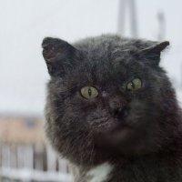 Сам я не местный, помогите кто чем может! :: Сергей Щербаков