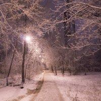Зима на пороге :: Наталья Сиротина