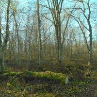 в грабовом лесу..на грабовом острове.. :: Михаил Жуковский
