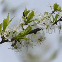 ностальгия по  весне :: Svetlana AS