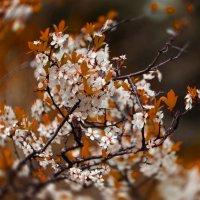 весна- осень :: Svetlana AS