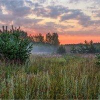 Утро в лесу :: Роман Тимошенко