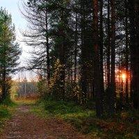 На склоне осеннего дня. :: Galina S*