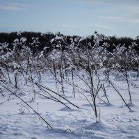 bushes :: Марк Додонов