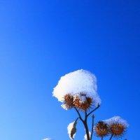 Под голубыми небесами.... :: Tatiana Markova