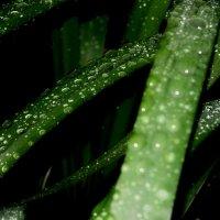 """Бриллианты"" чистой воды. :: kolin marsh"