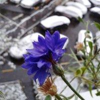 Зиме вопреки! :: Плюшевая Пальма