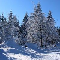 Морозным днём. :: Юрий. Шмаков