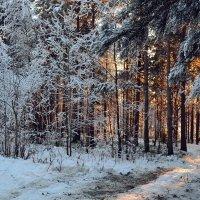 Заколдован невидимкой,дремлет лес под сказку сна... :: Ольга
