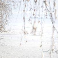 Зимушка :: Алена Булдина