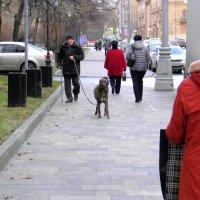 Декабрь в Москве... :: Елена