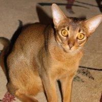 Ты что, котов не видела ??? :: Tatiana Markova