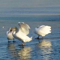 Озеро Нижний Кабан :: Наиля