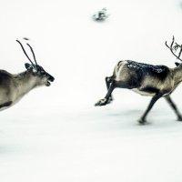 Быстро бегают... :: Виктор Вакарь
