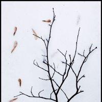 Зимний натюрморт :: Irina-77 Владимировна
