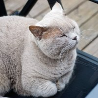 Спящий кот :: Valeria Ashhab