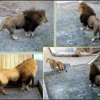 В Ростовском зоопарке :: Нина Бутко