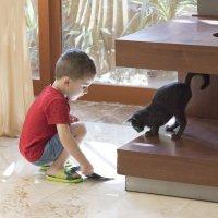 любопытство сгубило кошку :: Taigen Rokhman