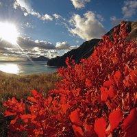 алеют листья осенним костром в закатном небе Киммерии :: viton