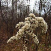 Зимние цветы :: Андрей Лукьянов