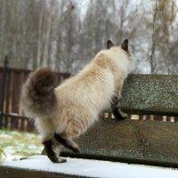Наиболее пушистая сторона кота :: Алёна Гершфельд