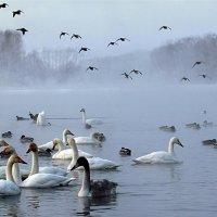 Сибирская зимовка :: И.В.К. ))