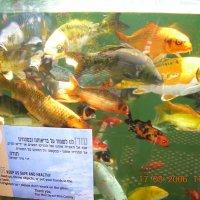 Рыбки :: Ефим Хашкес