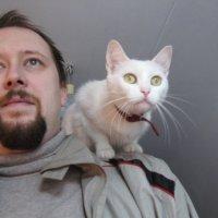 Заседание Верховной Рады - это цирк, который удивляет даже котов. :: Алекс Аро Аро