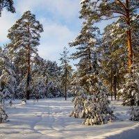 зима :: Вячеслав