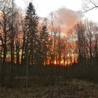 за лес уходит солнце :: Елена