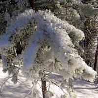 Зимний наряд... :: Геннадий Северный