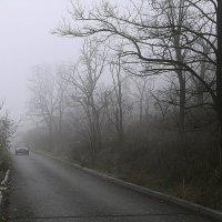 Туман на взморье... :: Людмила