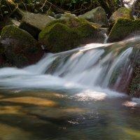 Лесной ручеек... :: Sergey Apinis
