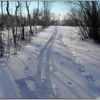На зимней прогулке :: Андрей Заломленков