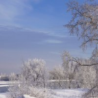 Зимние ветви :: Наталия Григорьева