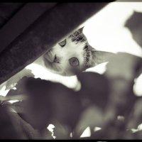 Spy cat :: Дмитрий Нигматулин
