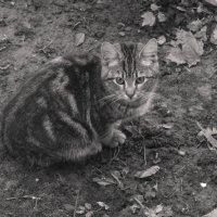Котёнок :: Aнна Зарубина