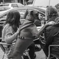Собачья жизнь в Мадриде... :: Людмила Синицына