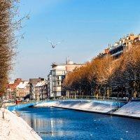 Зима и солнце (мороза нет) :: MVMarina