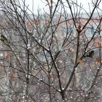 Снег падал за окном, и к веткам жались птицы... :: Ольга Ушакова